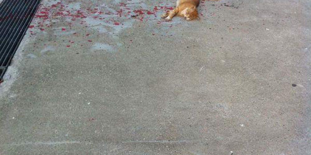 Все проходили мимо этого кота, но парень решил помочь ему