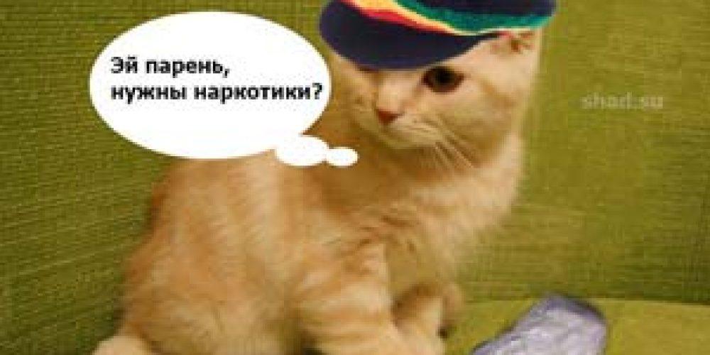 Котик продает наркотик