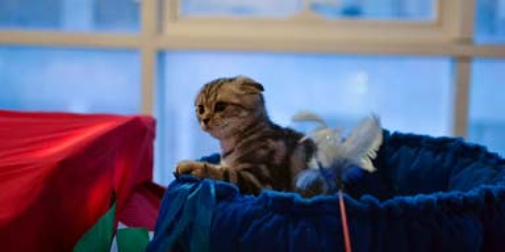 Выставка кошек: мимими и няняня